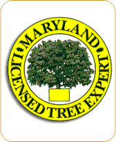 MD LICENSED TREE EXPERT